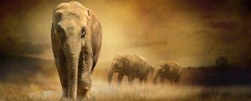 Ein Elefant und seine Herde wandern durch die Prärie.