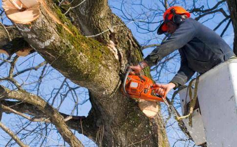 Richtiger Umgang mit Bäumen und Sträuchern
