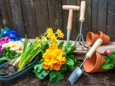 Gartenbeet mit Fruehlingspflanzen