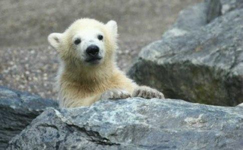 Zoo Bremerhaven Eisbärenbaby
