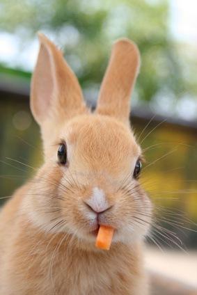 Die Kosten für kleinere Tiere, wie z. B. Hasen, sind in aller Regel niedriger