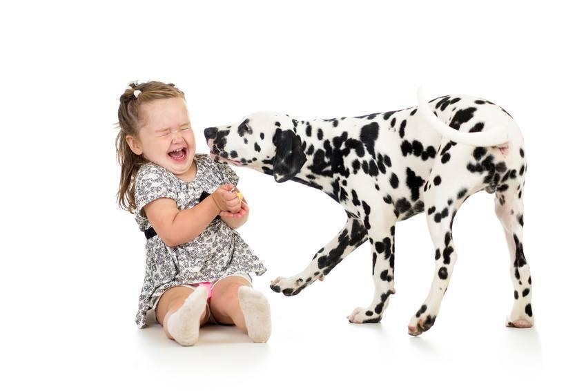 Hunde sind vor allem bei Kindern beliebte Haustiere
