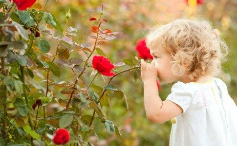 Kind riecht an einer Rose
