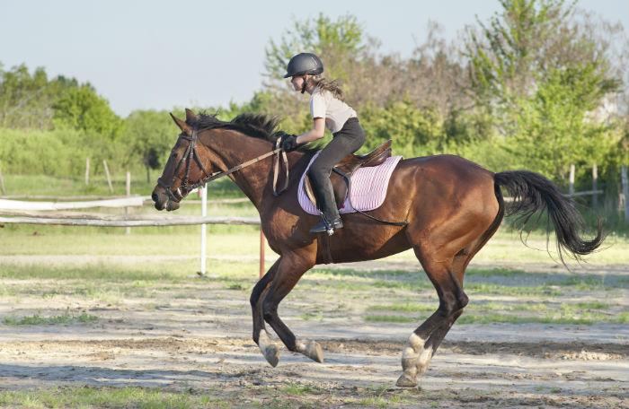 kinder und pferde - die leidenschaft fürs reiten