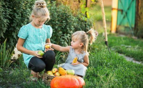 Zwei Kinder, die im Garten Obst und Gemüse sammeln