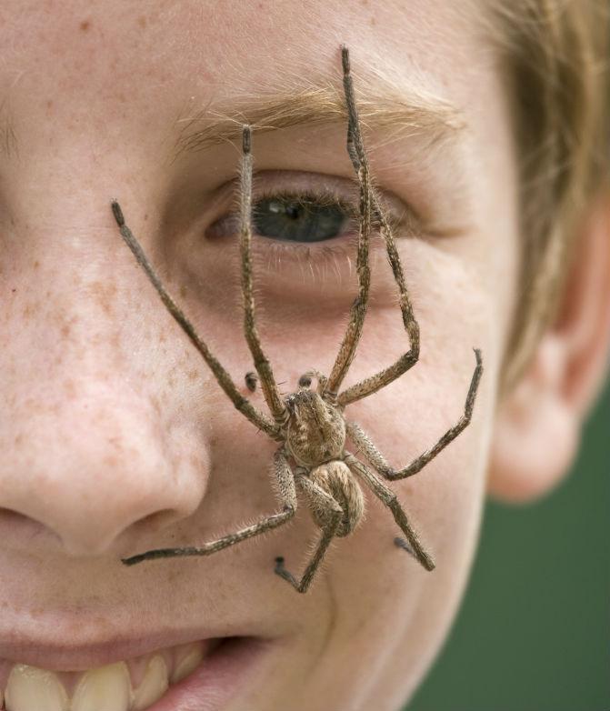 Spinne im Gesicht