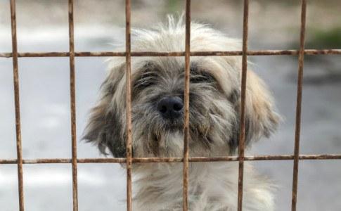 Hund kaufen Tierheim