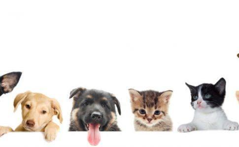 Gruppe von Haustieren