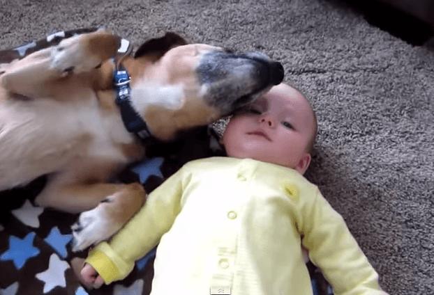 Hund kuschelt sich an Baby