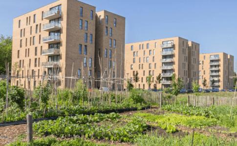 Ein kleines Gemüse- und Pflanzenbeet und im Hintergrund drei neuwertige Wohnblocks