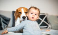 Baby zusammen mit einem Hund