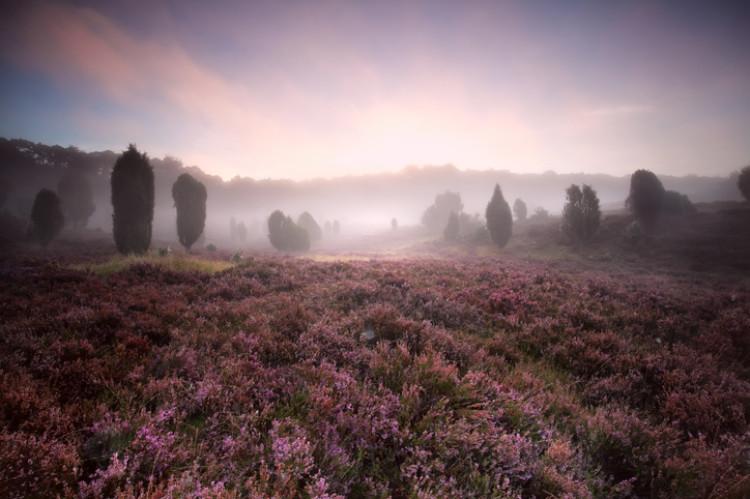 Lüneburger Heide im Nebel