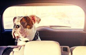Hund im Familienauto