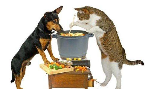 Lustig: Hund & Katze kochen Suppe