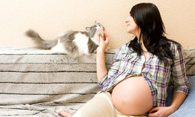Schwanger-mit-Katze