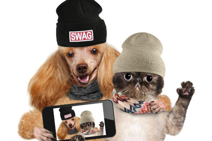 Verkleidete Hunde